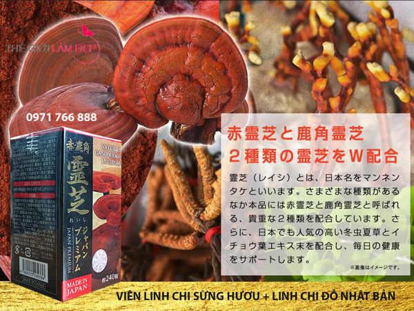 Vien nam linh chi sung huou tu nhien Nhat Ban 005
