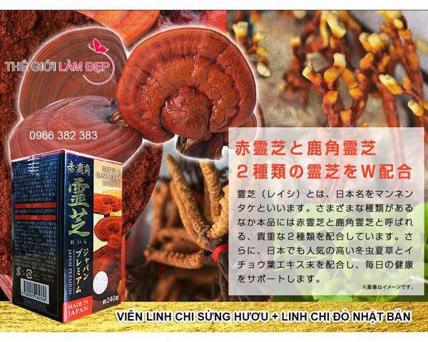 nam-linh-chi-sung-huou-nhat-ban-240-vien-016